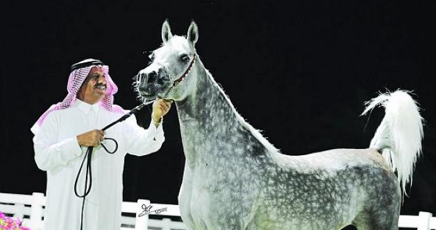 المهرة هيفاء الخالدية تتوج بالذهب في بطولة السويد الدولية
