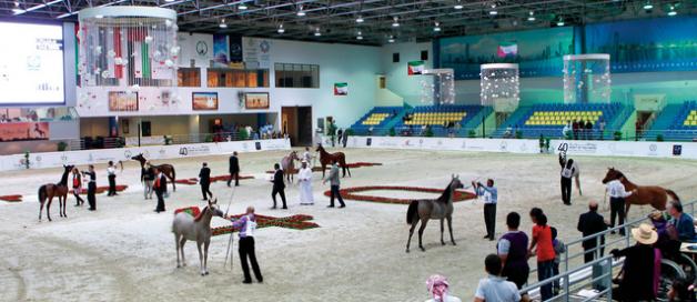 ٢٥٠ خيلاً في مهرجان الشارقة للجواد العربي ٢٠١٢ والانطلاقة الأربعاء
