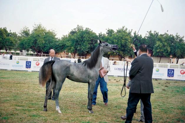 160 جواداً تتنافس في مهرجان الشارقة للإنتاج المحلي