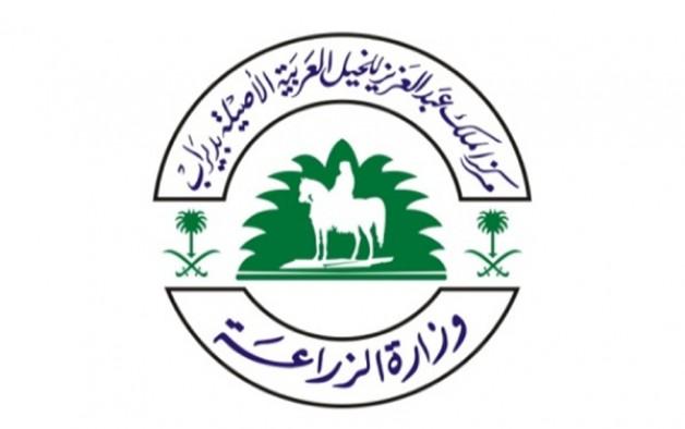 مركز الملك عبدالعزيز للخيل العربية ينهي استعداده لبطولة المنتجين الثالثة بالطائف
