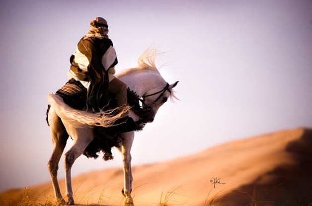 قصص في وفاء الخيول العربية الأصيلة