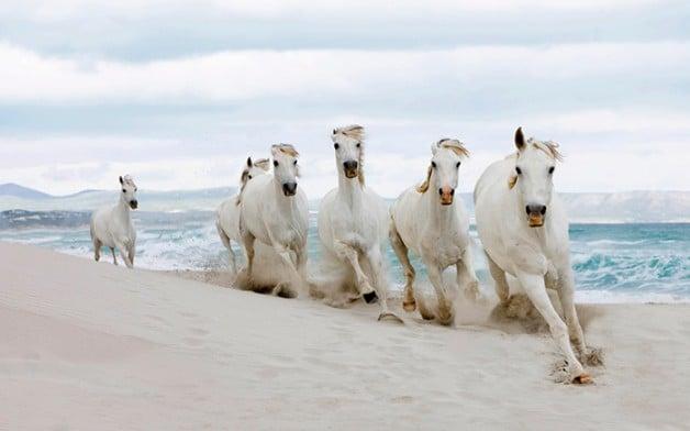 وزارة «البيئة والمياه» الامارتيه تشكل وفداً للاطلاع على الأوضاع الصحية لمحاجر الخيول في البحرين