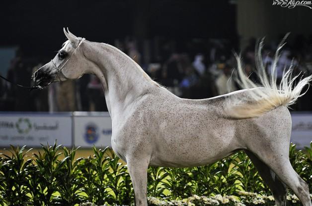 مهرجان الأميرسلطان بن عبدالعزيز ينطلق غداً بجوائز تقدر بـ 8 ملايين ريال