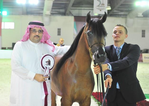 الإنتاج السعودي يحقق ستة ميداليات في بطولة الشيخ سلطان بن زايد ال نهيان لجمال الخيل العربية