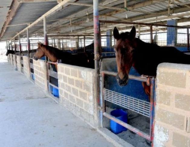 في البحرين: سنلجأ للقضاء للمطالبة بتعويضنا عن إعدام خيولنا المصابة بـ «الرُعام»