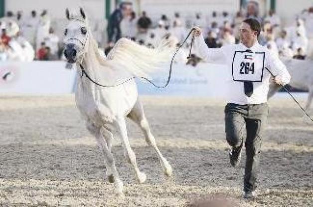 «الخيول المصرية» أشعلت المهرجان الدولي للجواد العربي