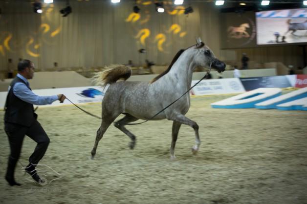 حمدان بن راشد يفتتح الدورة العاشرة لبطولة دبي الدولية للجواد العربي والتاسعة لمعرض دبي للخيل