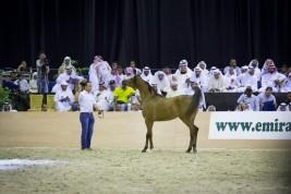 بيع 60 خيلاً في دبي مقابل 4 ملايين درهم في المزاد المصاحب لبطولة دبي للجواد العربي
