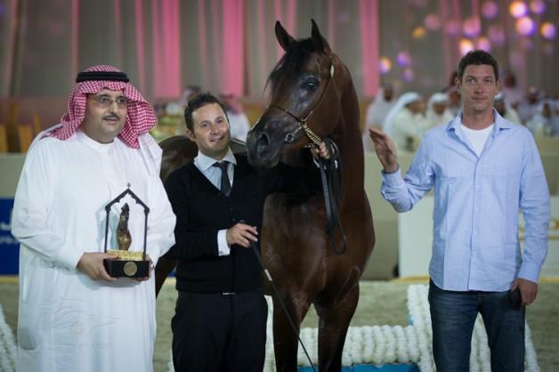 نتائج التصفيات لليوم الأول والثاني بطولة دبي الدولية للجواد العربي 2013