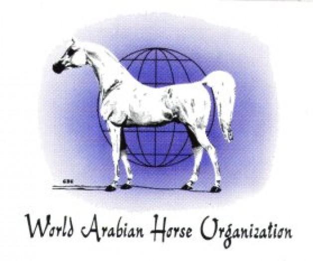 المنظمة العالمية للخيل العربية الأصيلة «واهو»