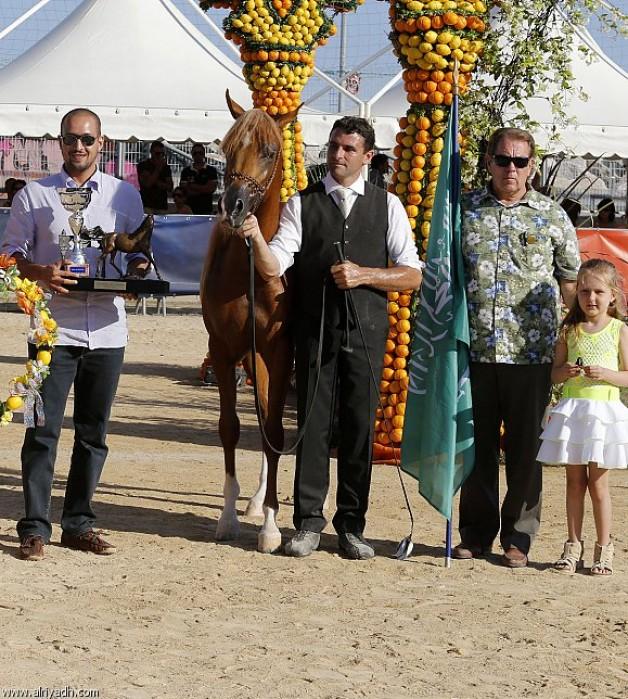 نتائج بطولة منتون الدولية للخيل العربية الأصيلة ٢٠١٣