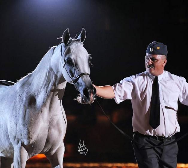 قائمة مزاد فخر بولندا العالمي السنوي للخيول العربية الأصيلة ٢٠١٣
