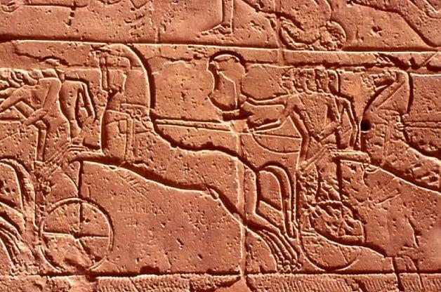 دراسة تعيد أصل الخيول لأربعة ملايين عام