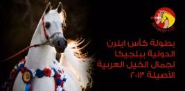 نتائج بطولة كأس ايلرن الدولية ببلجيكا لجمال الخيل العربية الأصيلة ٢٠١٣