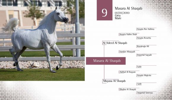 Auction2012-CATALOG(high)_Page_18