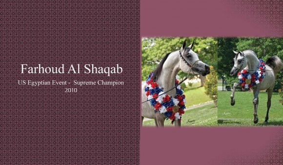 Auction2012-CATALOG(high)_Page_43