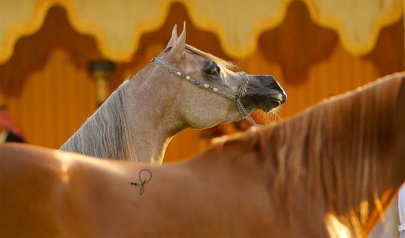 بطولة مركز الملك عبدالعزيزiSSS-1