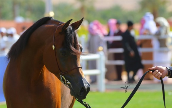 مركز الملك عبدالعزيز ديراب البطولة الوطنية