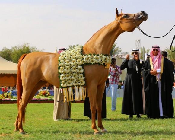 بطولة مركز الملك عبدالعزيز  مركز الملك عبدالعزيز ديراب البطولة الوطنية