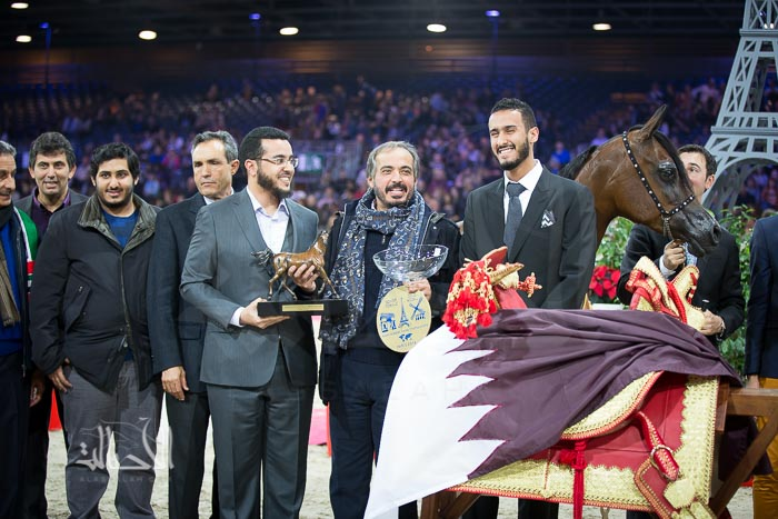 NAJDAH AL ZOBAIR (MARWAN AL SHAQAB x  JFN BINT LUDHAN) - Al Zobair Stud - AE