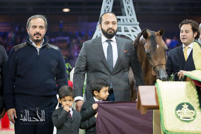 GHAZWAN ALJASSIMYA (MARWAN AL SHAQAB x  ATHINA EL JAMAAL) - Al Jassimya Farm - QA