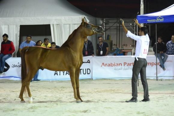 البحرين ٢٠١٥