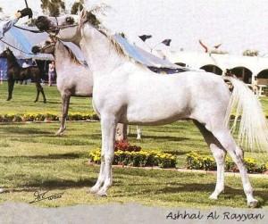 q2_ashhal