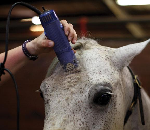 لكل حصان شكل طبيعي يكون في شكل مقلوب الحرف الانجليزي (V)