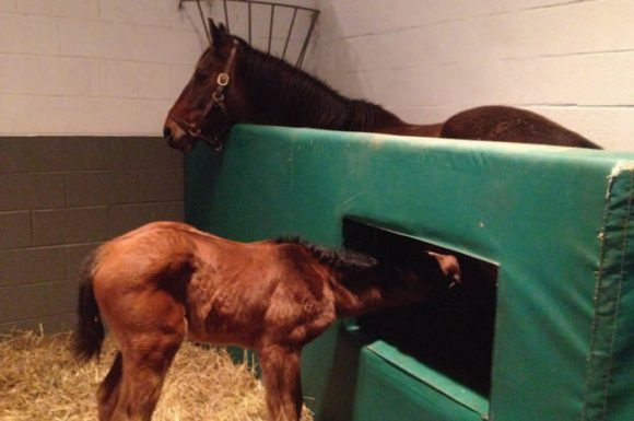 Managing Foal Rejection