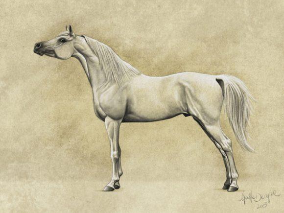 نوع- الدهمان مزيج جميل بين نوعي الكحيلان والصقلاوي. جسم متوازن، مؤخرة جيدة، في المجمل حصان مربع الشكل ذو عظام جيدة وحوافر أصغر. رقبة متوسطة الطول، جيدة التقوس. الرأس عريض، مقعر والعينان كبيرتان تقعا في مكان جيد في الثلث الأعلى من الرأس. الخطم والأذنان صغيرة.