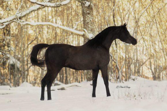 نصائح لإدارة مرابط ومزارع الخيول في فصل الشتاء