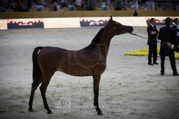 ياس بي اتش أم (كحيل الشقب x كاترينا أف أم) علي غانم علي المزروعي – الإمارات