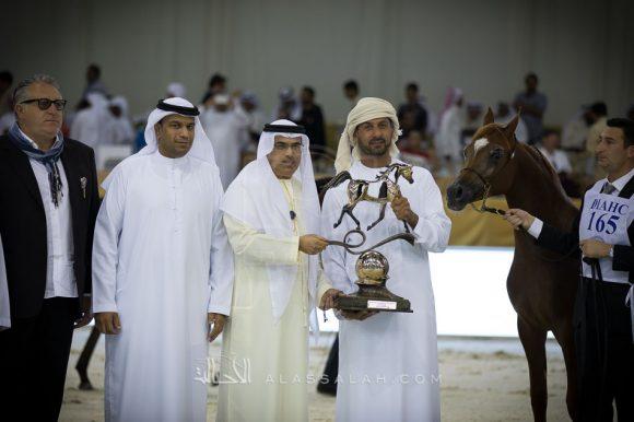 دي شلال (أف أيه الرشيم x دي شهلا) مربط دبي – الإمارات