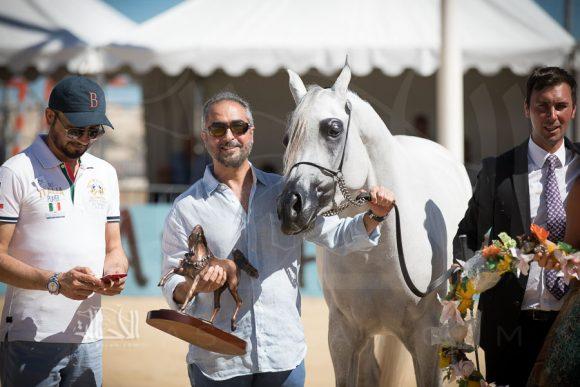 مزن البداير (ماجيك ون x ماتاهاري) مربط البداير – الإمارات