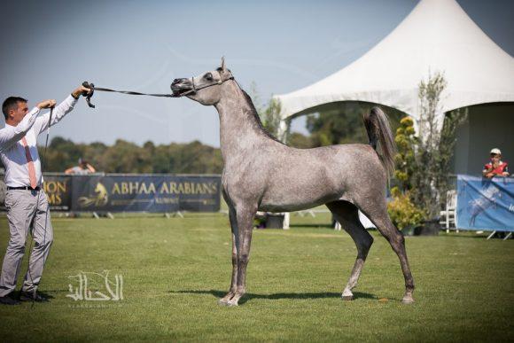 دي رنانة (دي خطاف x جميلة) مربط دبي – الإمارات