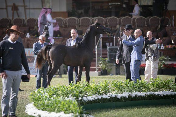 الأمير سلطان الخالديةISSS2515