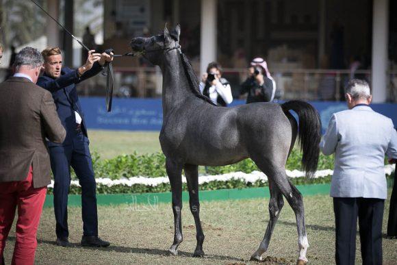 الأمير سلطان الخالديةISSS2571