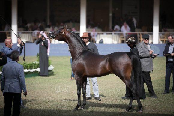 الأمير سلطان الخالديةISSS2792