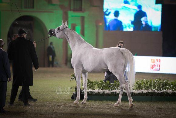 الأمير سلطان الخالديةISSS2994