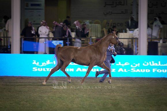 الأمير سلطان الخالديةISSS2998