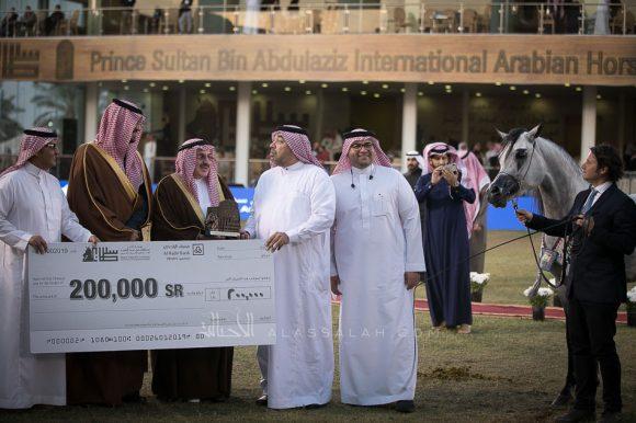 سلطان العناية(اميرالد جيx امونة) مربط العناية – السعودية.