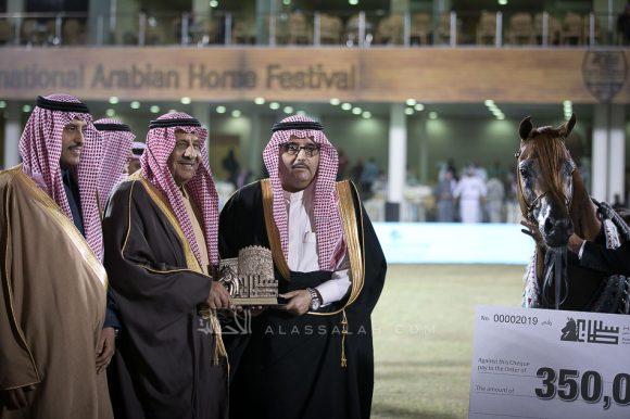اسكوت دي دي (جلوريس ابال x لادي مينا دي دي) مربط عذبه – السعودية.