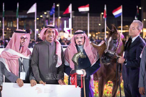 The final results of the Asharqia Arabian Horse Classic 2019