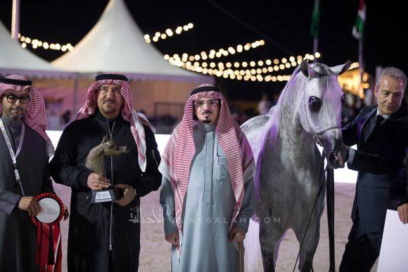 يعسوب المعود  (شنغهاي إي ايه  x اليشا) إسطبلات الخالدية – السعودية
