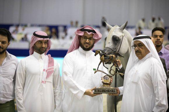 اليكساندر (اكس كالبوريا x أي ار موست ارسستبل) مربط السيد – السعودية. Alexxanderr (Excalibur EA x AR Most Irresistible) Alsayed Arabian Horse Stud- KSA