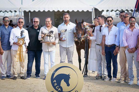 دي مزيان (اف ايه الرشيم  x  دي مزايا) مربط دبي – الإمارات