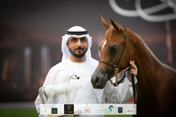Arjuwan earns silver Yearling Colts medal for Al Bidayer Stud in 2020 Ajman Arabian Horse Show