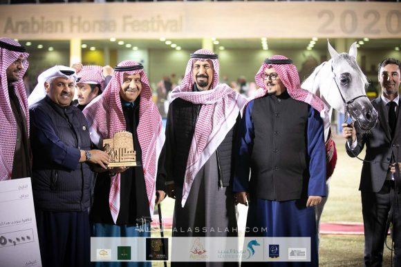 مليكة الملوك (مملوك x اصالة الهالة) مربط الخشاب – الكويت.
