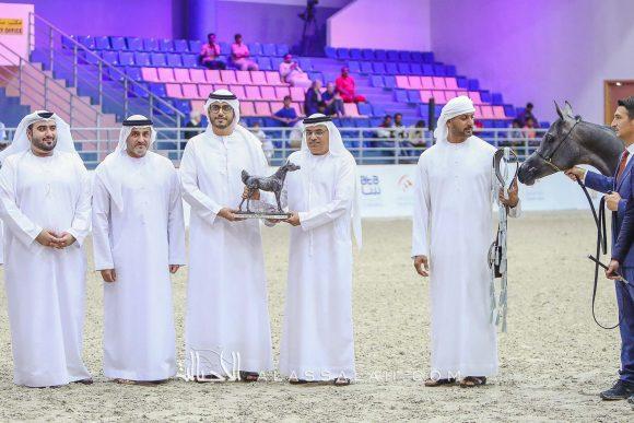 دي جورية (دي سراج x دي نوال) مربط دبي – الإمارات.