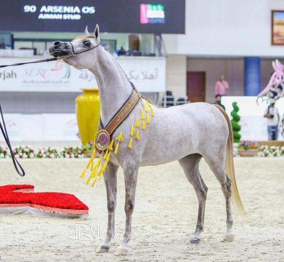 دي غرام (اف ايه الرشيم x اف تي شيلا) مربط دبي – الإمارات.